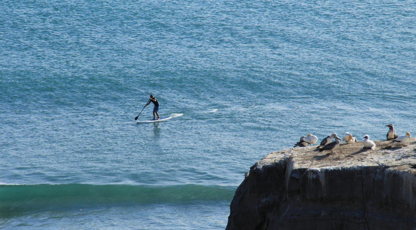 stamina paddle board